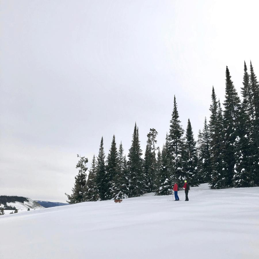 Nordic skiing at Steamboat Lake State Park