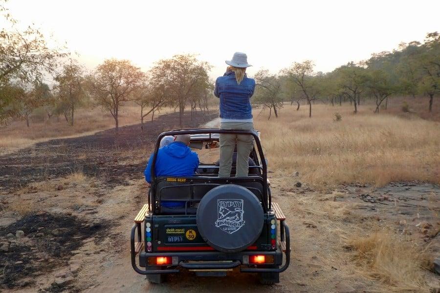 safari in panna national park india