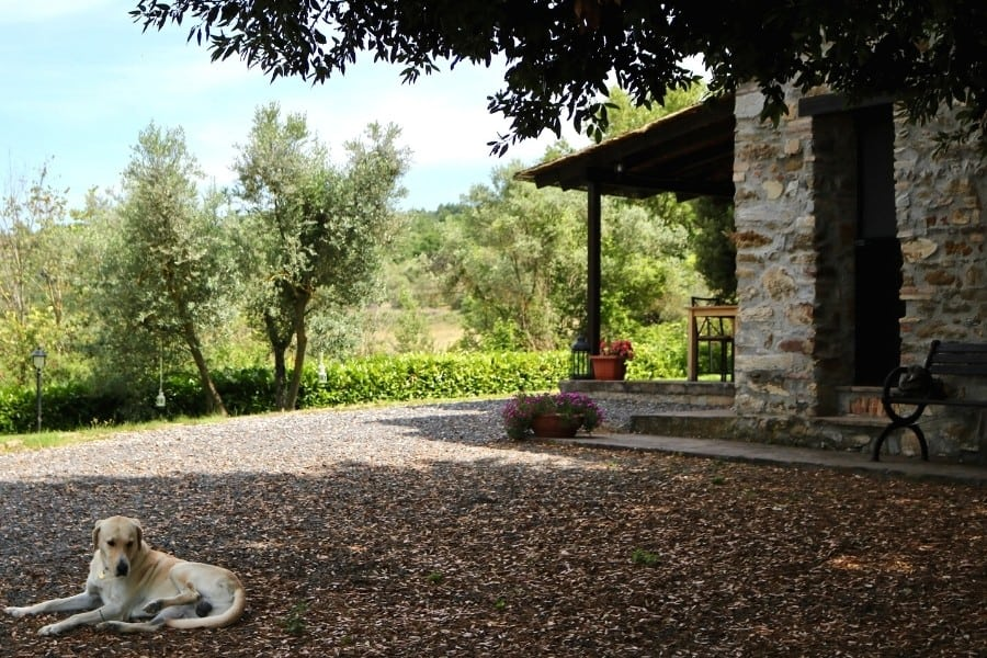 The resident dog relaxes in the shade at Agriturismo Antica Olivaia