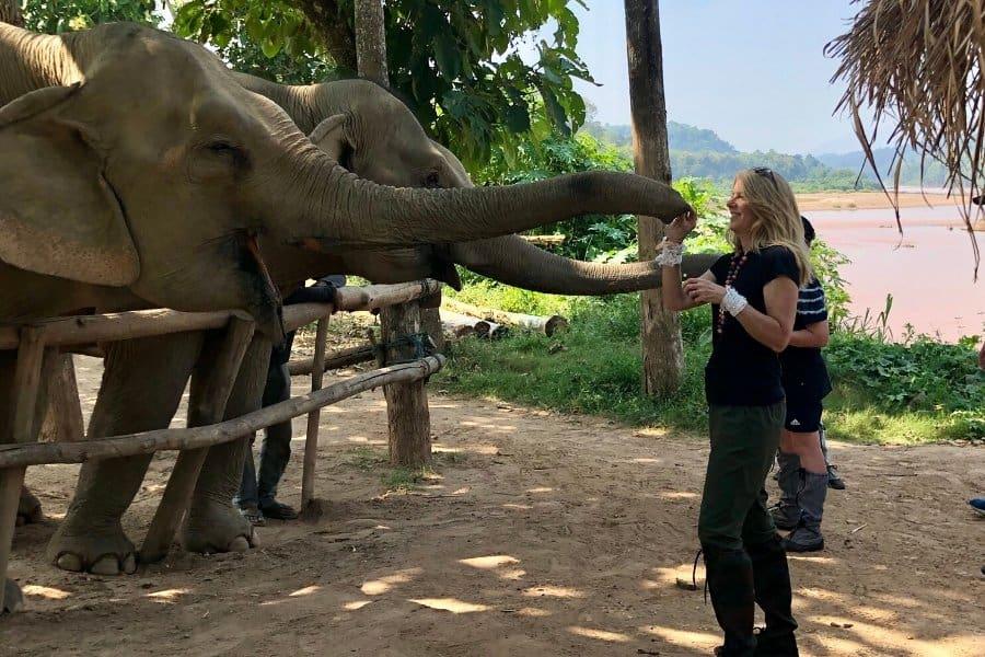 meeting elephants at mandlao ethical elephant santctuary