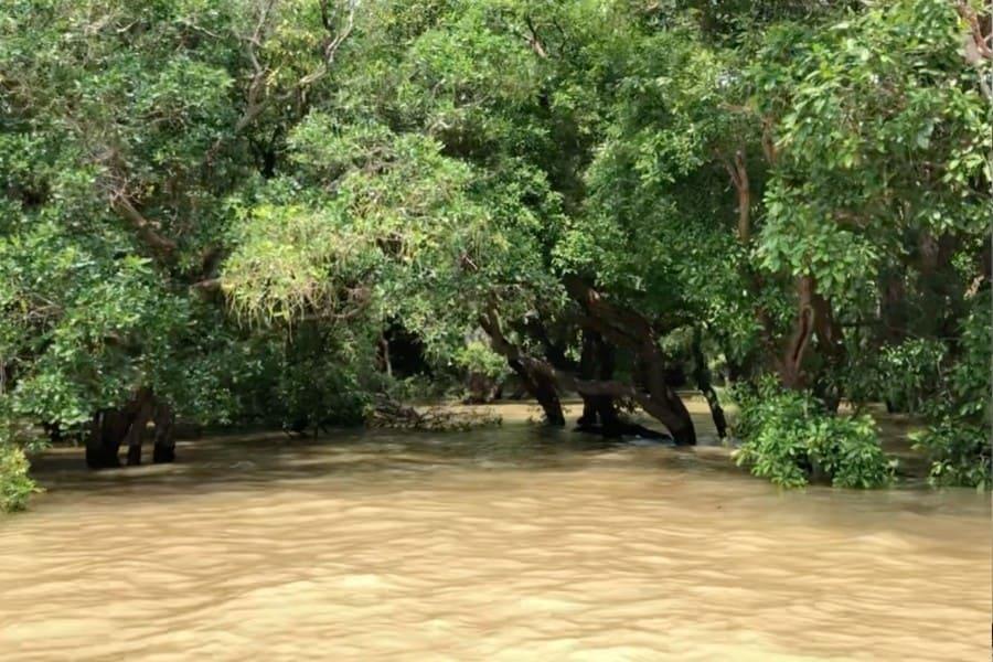flooded mangrove tonle sap cambodia