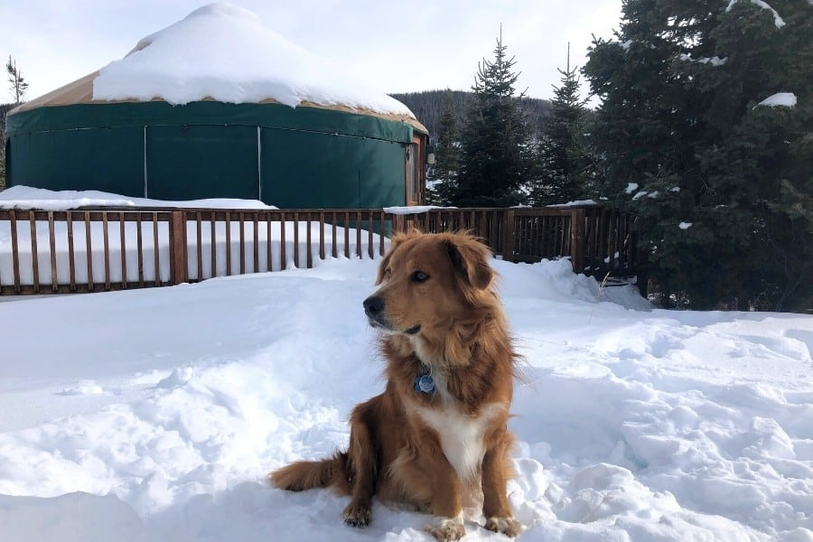 A dog poses in front of a Colorado yurt in winter
