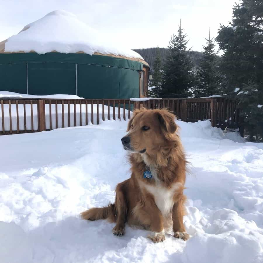 A dog sits in front of a Colorado state park yurt in winter