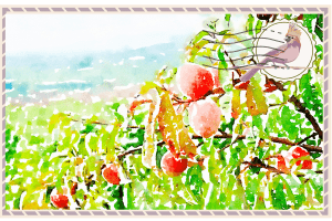 A post card style image with an illustration of a peach tree and Italian hillside. And a stamp with the Midlife Globtrotter logo in the right corner